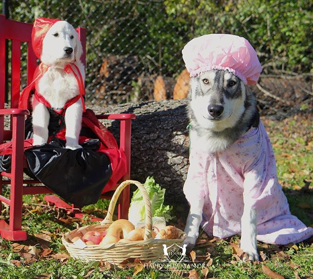 """""""Oh grandmother, what a large mouth you have."""" """"The better to eat you with!"""" #littleredridinghood"""