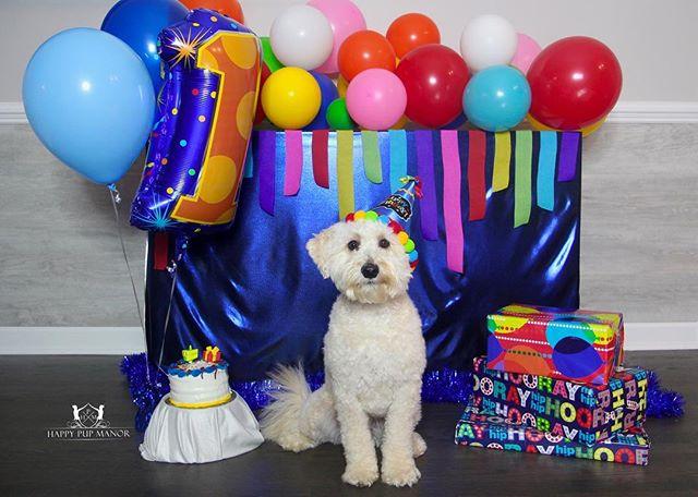Happy 1st birthday to this handsome boy Baxter!! 🤩😍🎂🎉🎈