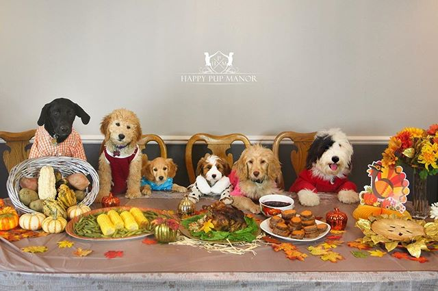 There is always something to be grateful for! Happy Thanksgiving! 🦃🍁🌽 To train your pup to sit at the Thanksgiving table, please visit www.happypupmanor.com