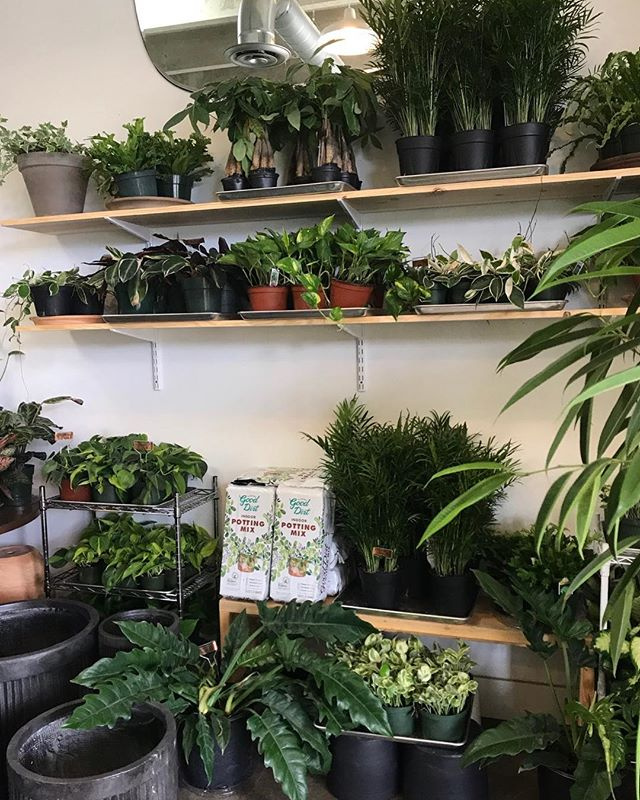 Hello, Saturday! Come shop plants + @thegoodfill refill pop-up. Open 11-5.