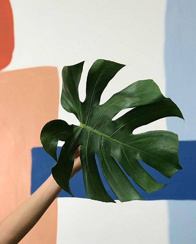 Happy Monstera Monday! Thanks to our shop gal @duhitslindsay for the photo.
