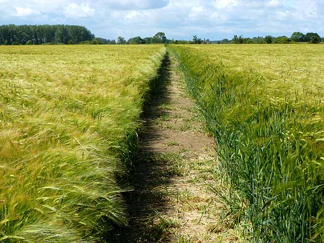 the barley field of boaz