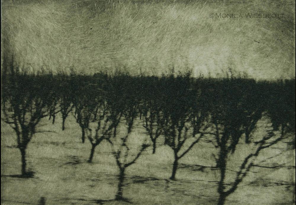 Almond Trees at dusk