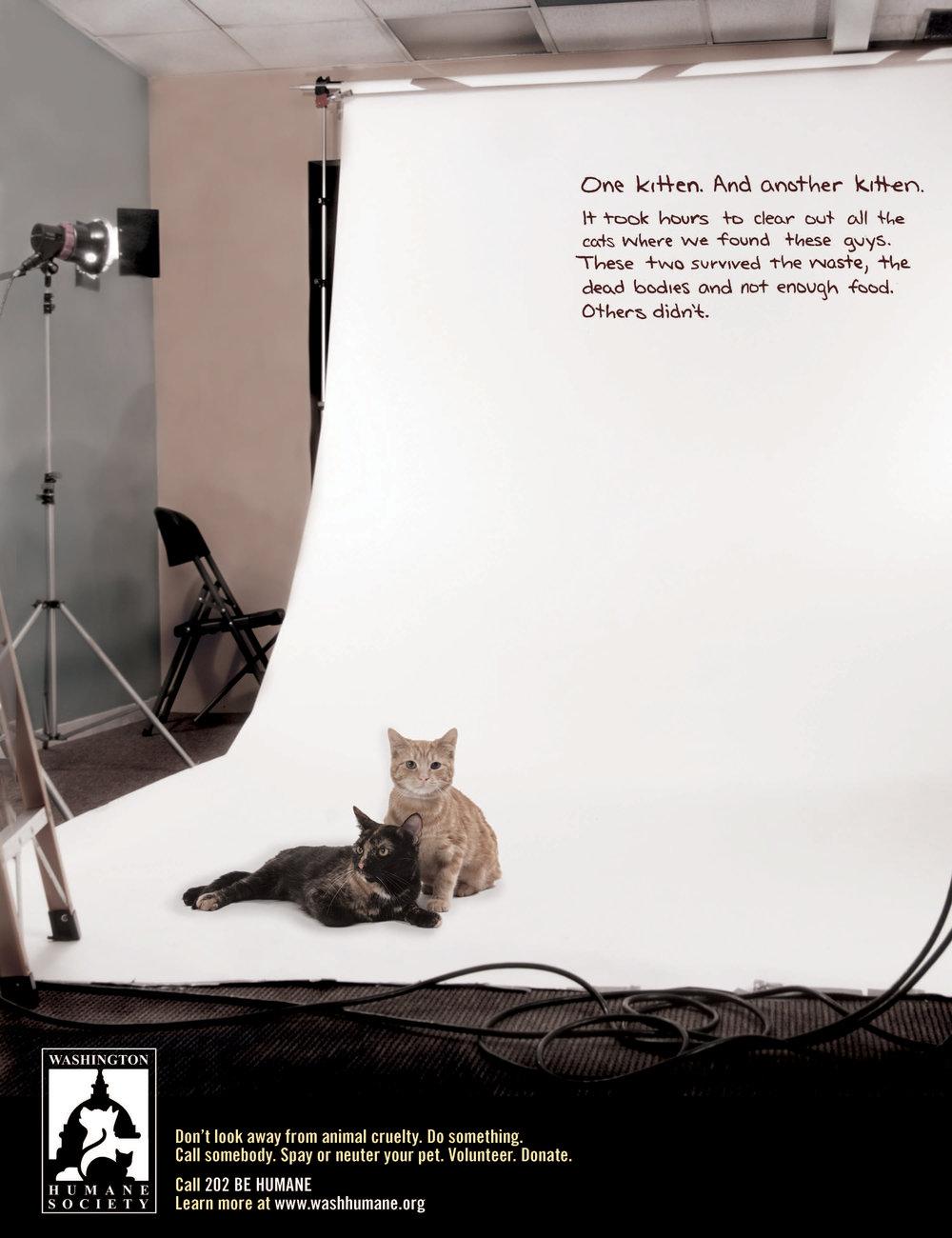 Humane Society -CATS.jpg