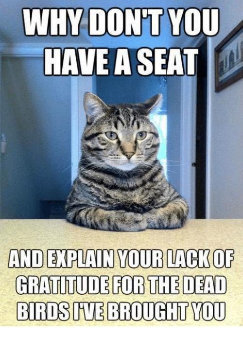 gratitude cat.png
