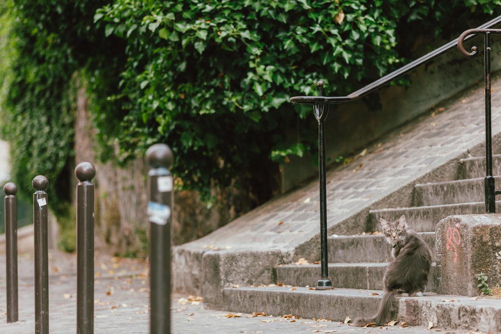 Paris Photographer, Montmartre, Lovestory, France, cat, chat, iheartparisfr