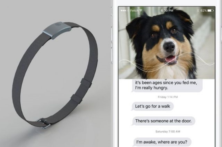 The WhatsYapp smart collar will help you read your mutt's mind