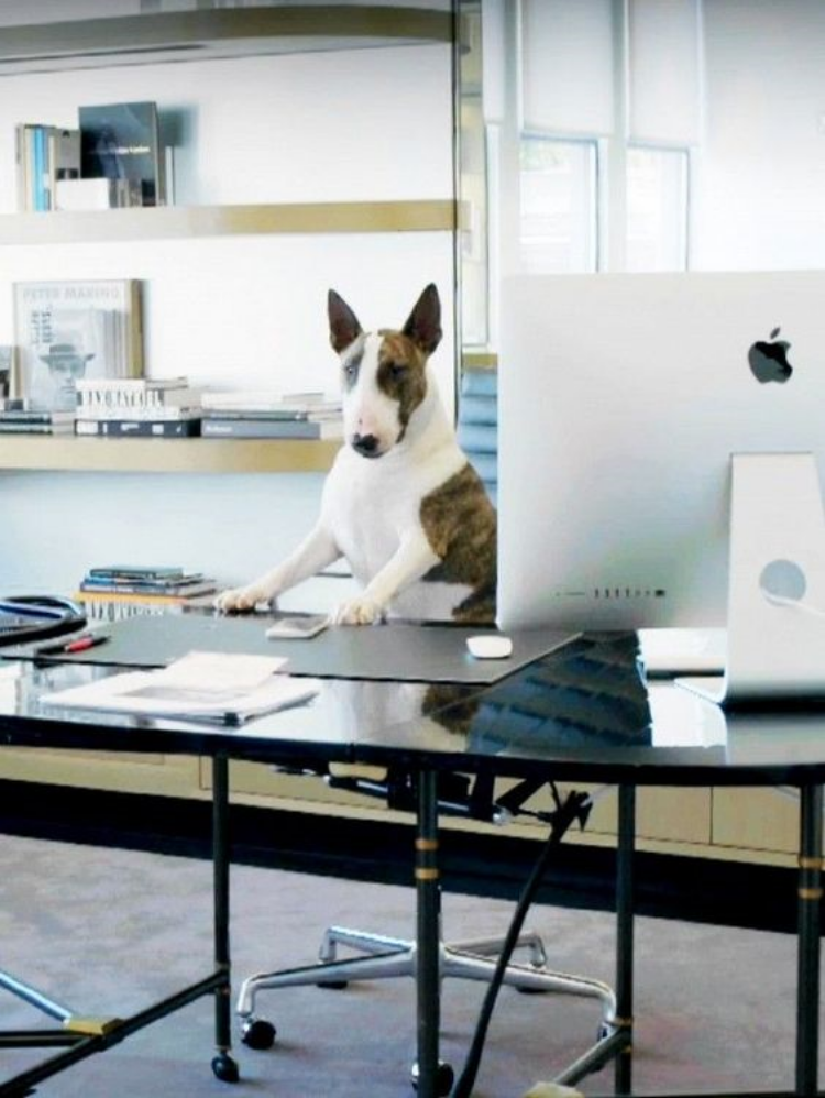 Dog boss @NevilleJacobs, Creative Director of the Marc Jacobs empire.