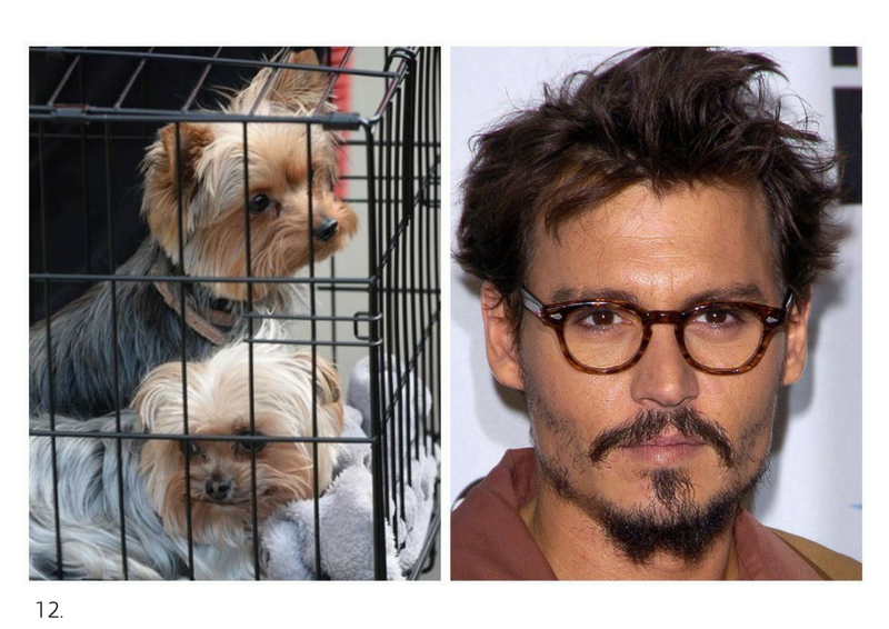 Johnny Depp's dogs, Pistol and Boo.