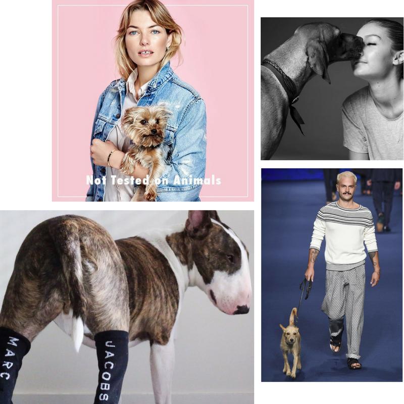 Model dogs