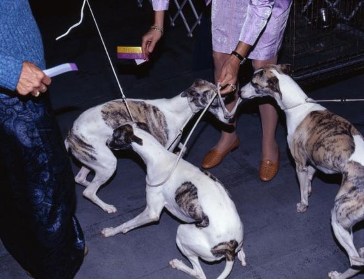 Dog Shows Martin Masai Andersen