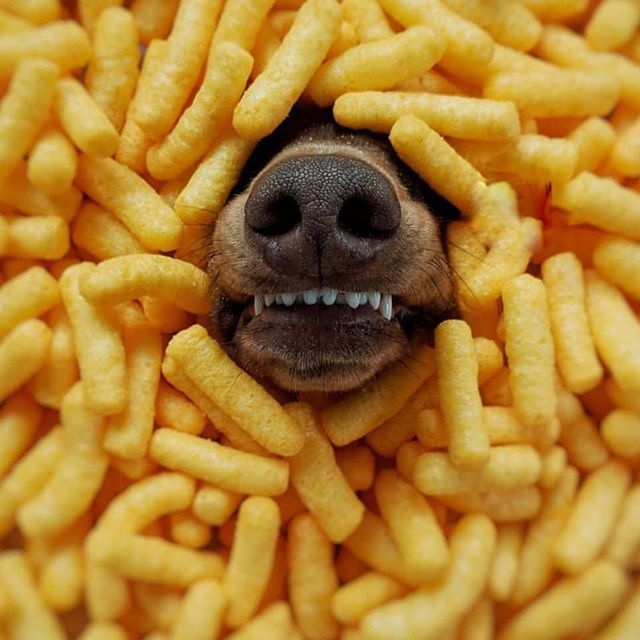 Friday night supper 🍟🍟🍟 🐶 😬📷@schmitt.happenss #growlmama #friesbeforeguys #schnoot