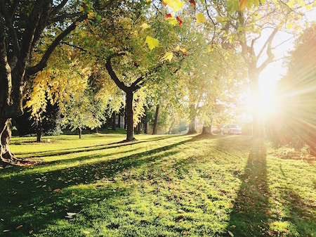 trees-grass-sun-park.jpg