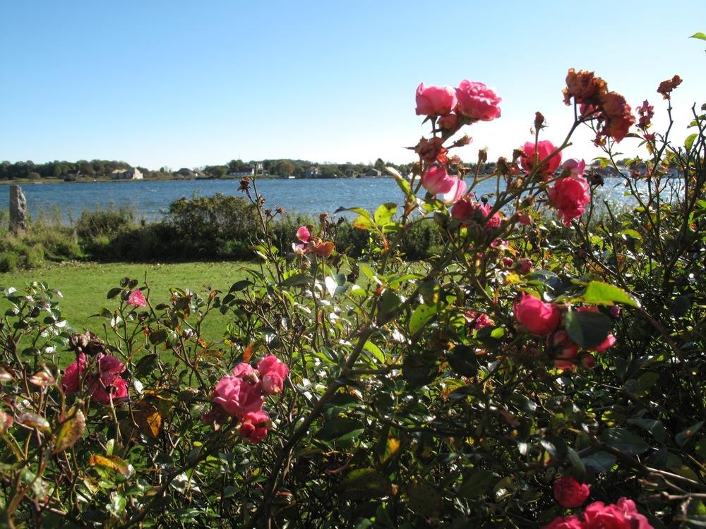 rosenbusk.jpg