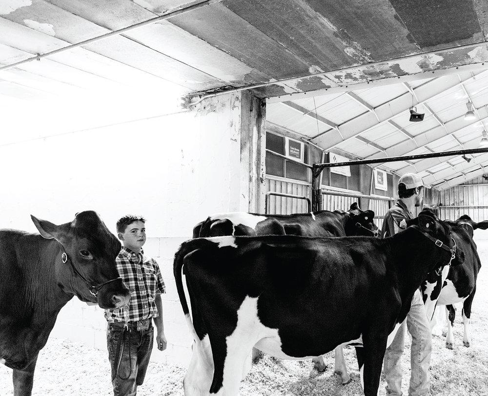 Livestock Barn, State Fair.jpg