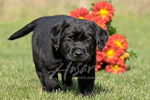 Blk puppy fall.jpg