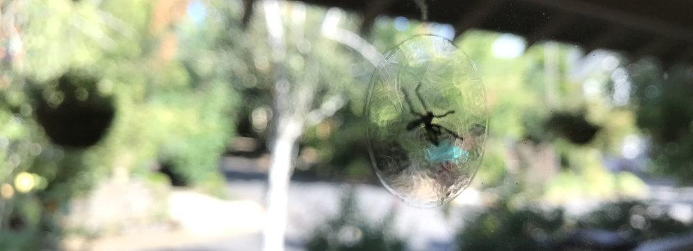 window fly.jpg