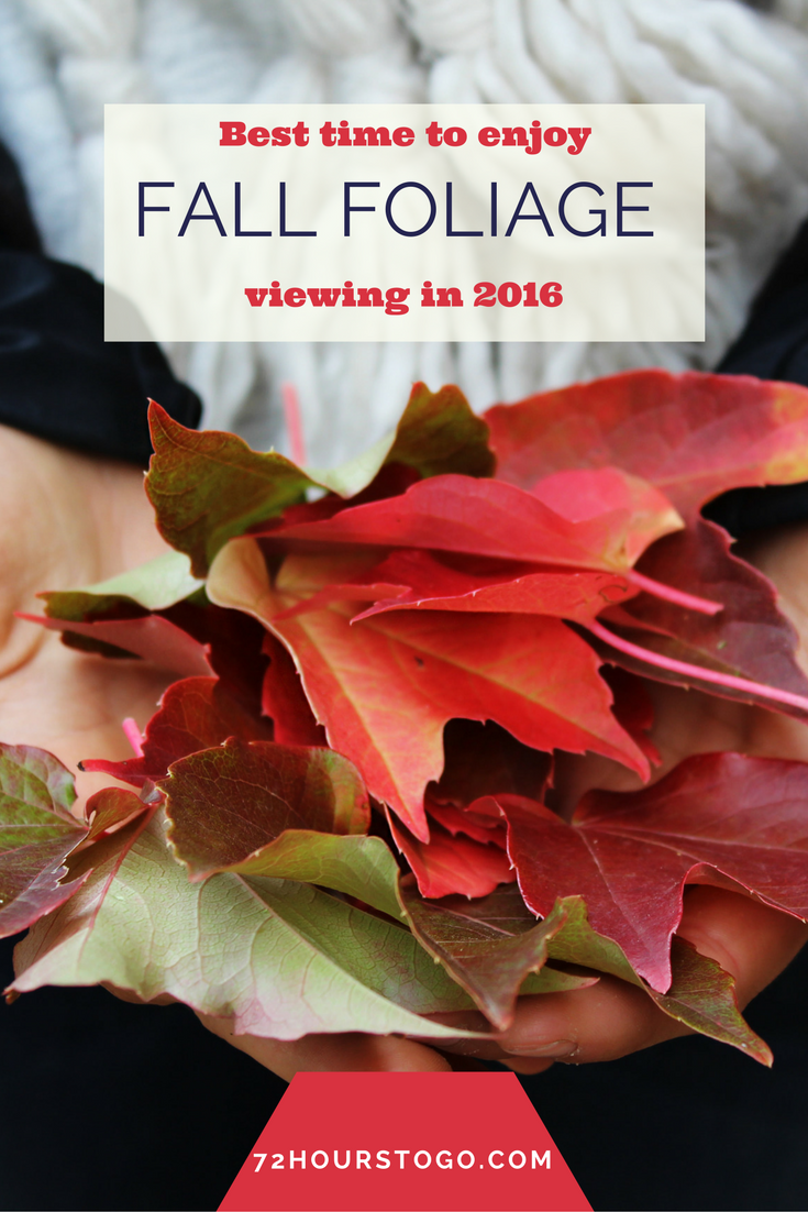 peak fall foliage graphic