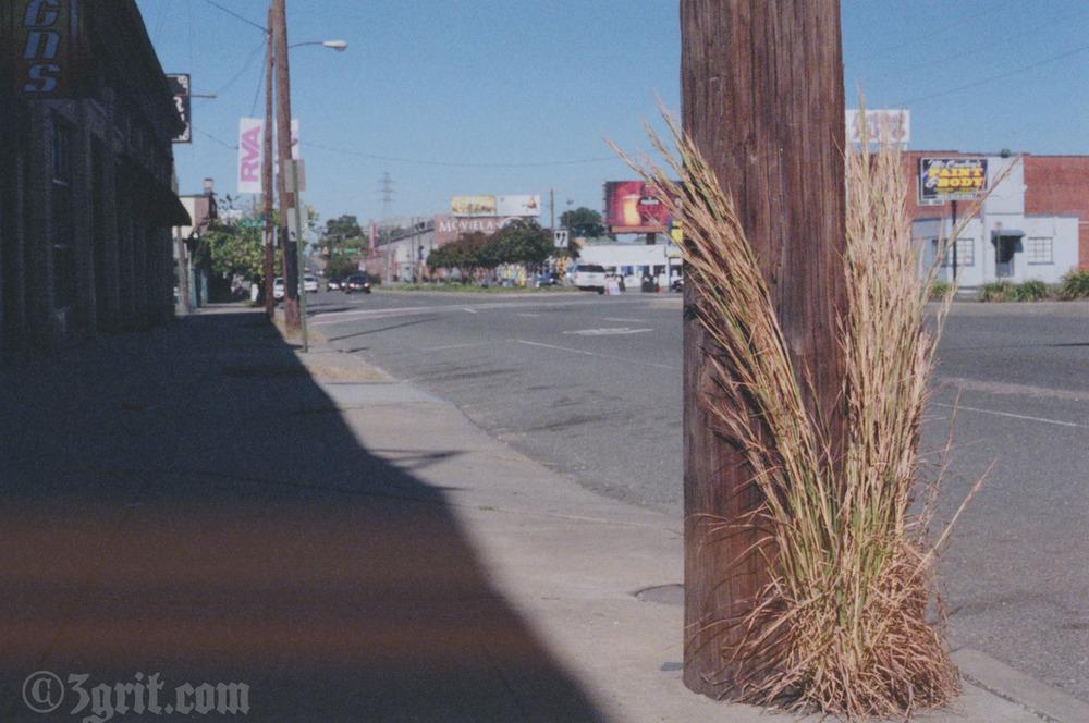 weeds by road 1.jpg