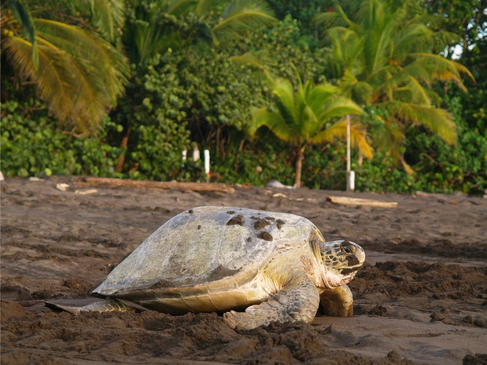 individuele-costa-rica-rondreis-tortuguero-min.jpg.pagespeed.ce.ZyipHap5i6.jpg