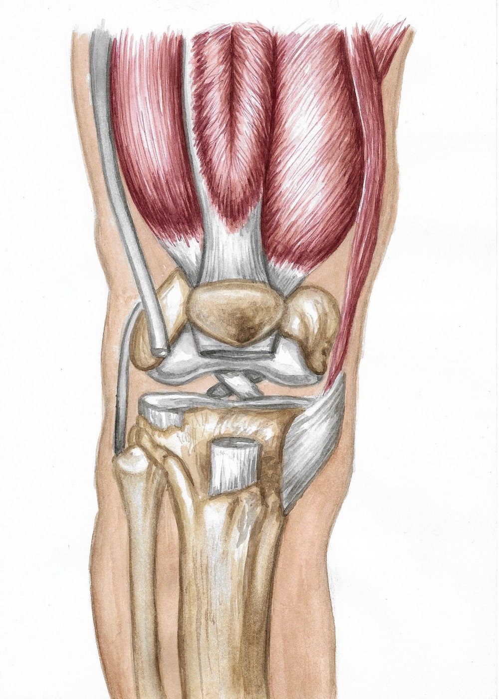 "Medical illustration of knee joint. Watercolor and pencil on Canson mixed media paper. 10x7.""  2018."