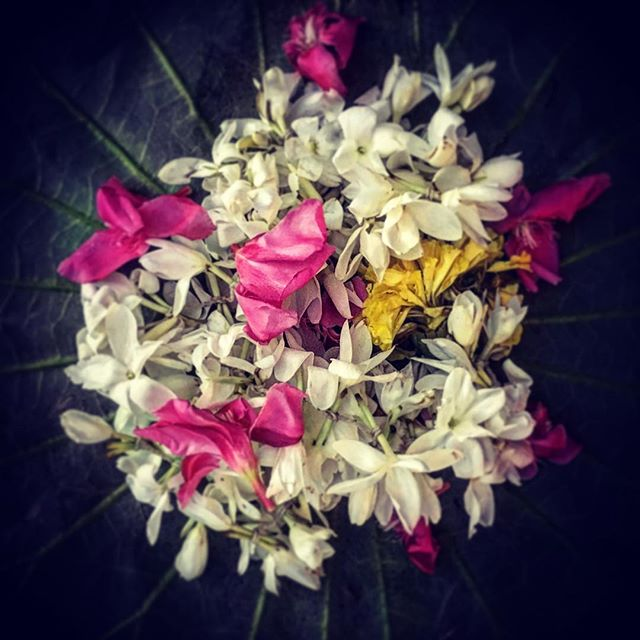 Saying #thankyou with #flowers . .  #India #Kerala #Jasmine #offering #givingthanks  #templeflowers #FlowersEveryDay