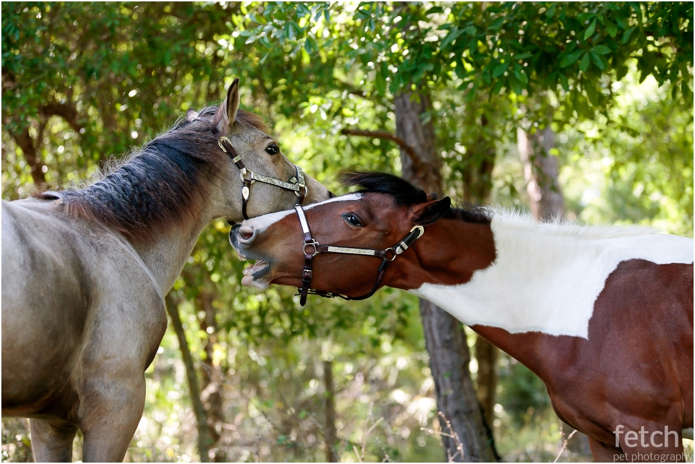 cute-horses-playing-together