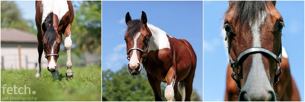 yearling-nose-blue-sky-horse