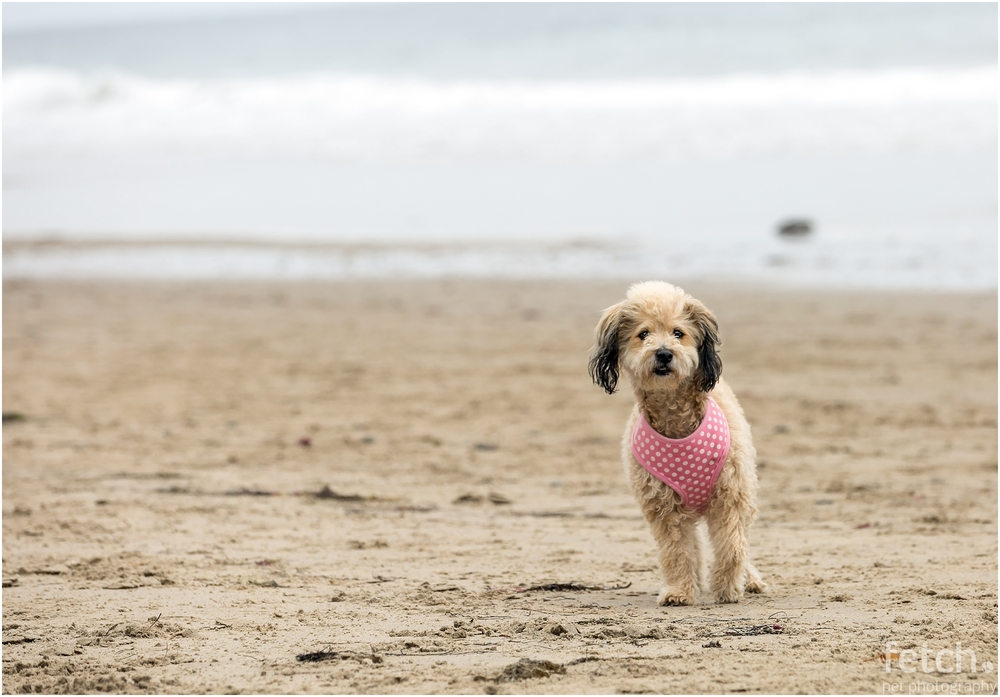 cute-dog-in-pink-polka-dogs