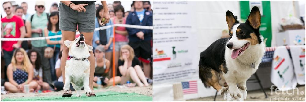 corgi-trick-contest-beach
