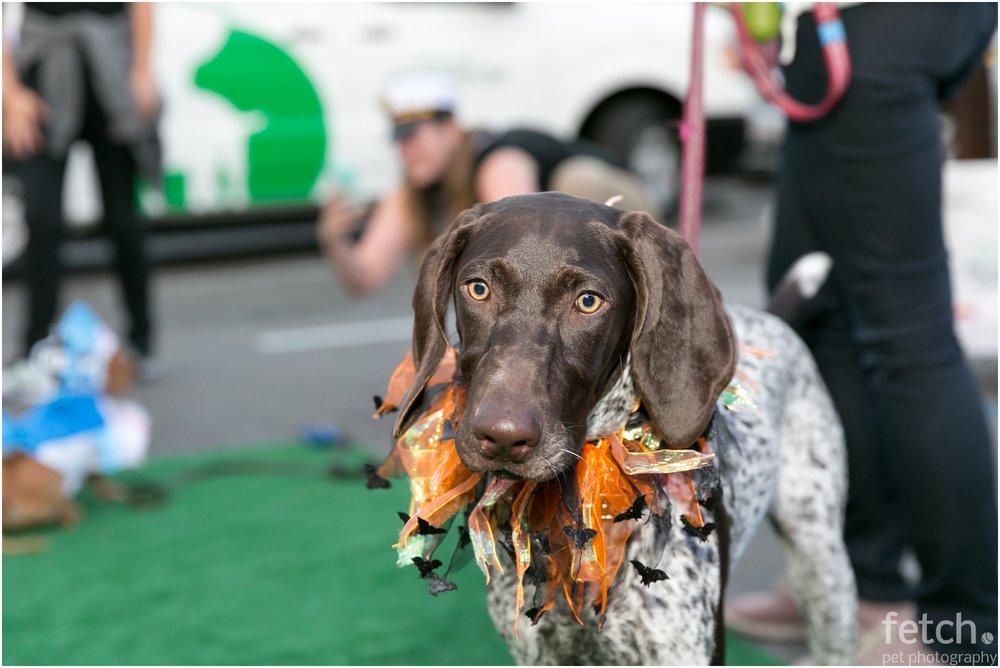 dog-halloween-costume-idea