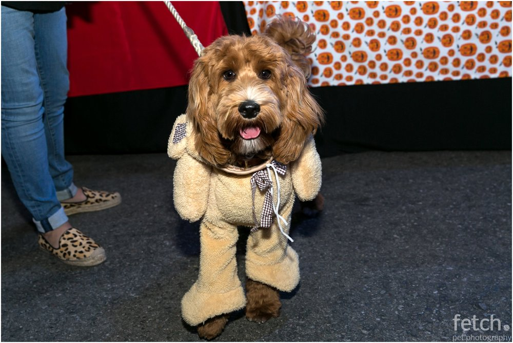 teddy-bear-dog-costume