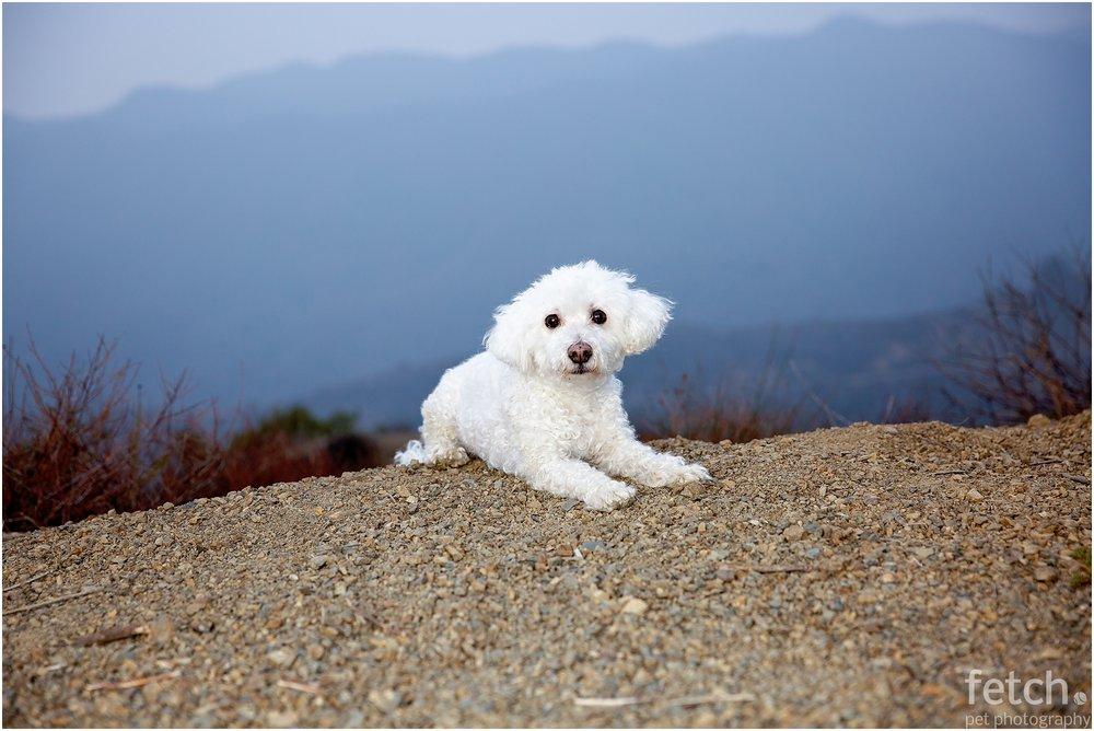 mandeville-canyon-dog-photography