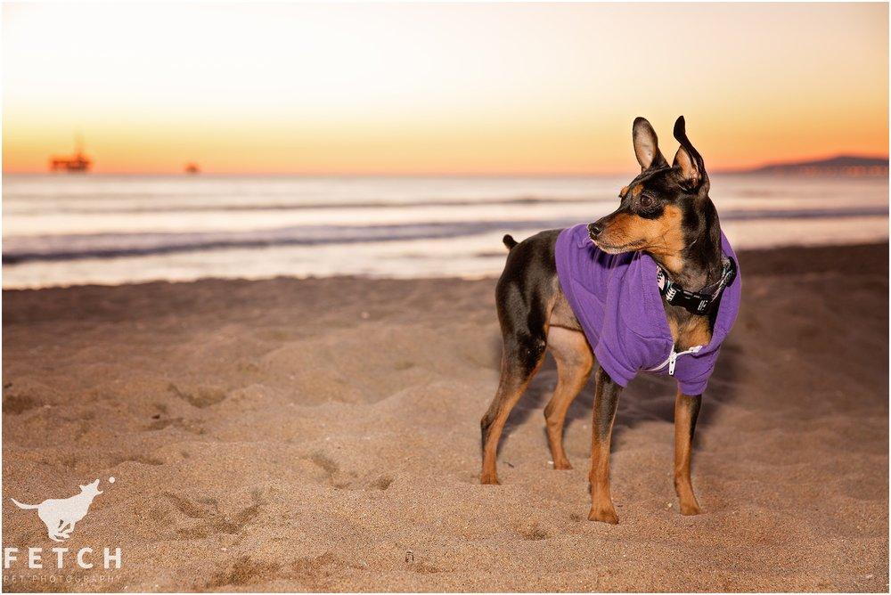 american-apparel-dog-hoodie