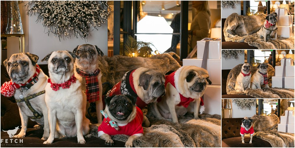 pug-holiday-photos