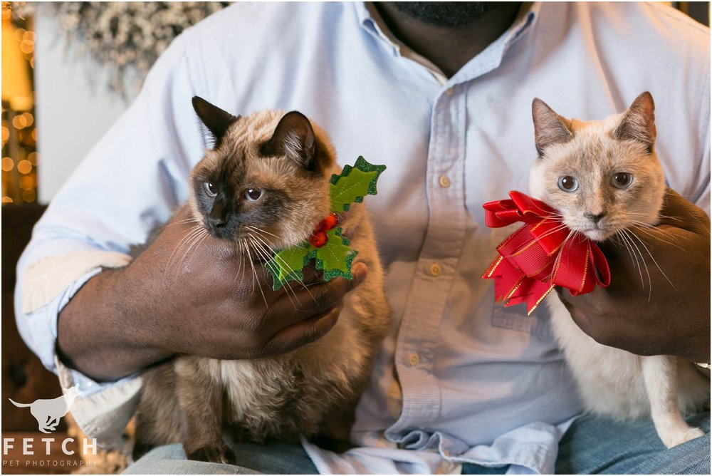 cat-holiday-photos
