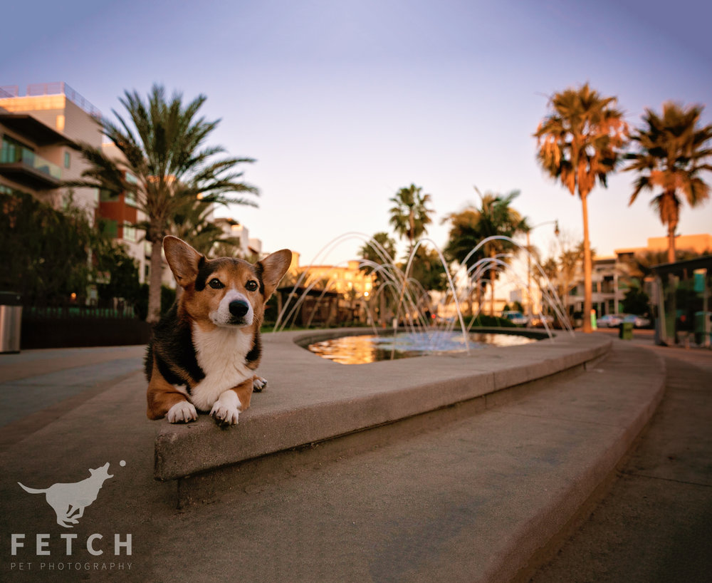 los-angeles-dog-photographer.jpg