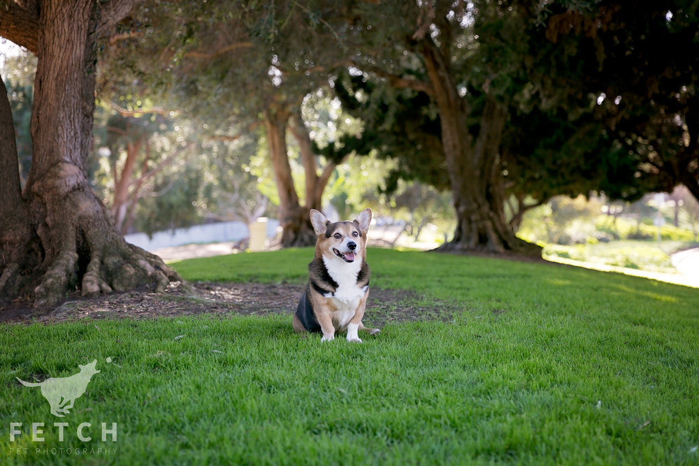 los-angeles-pet-portrait