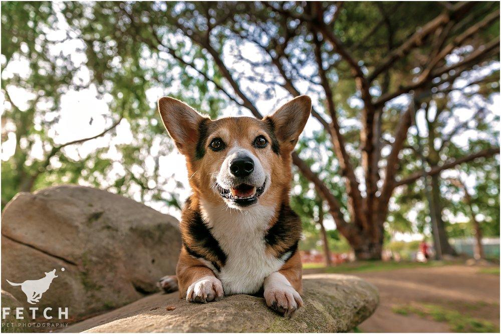 dog-park-portraits