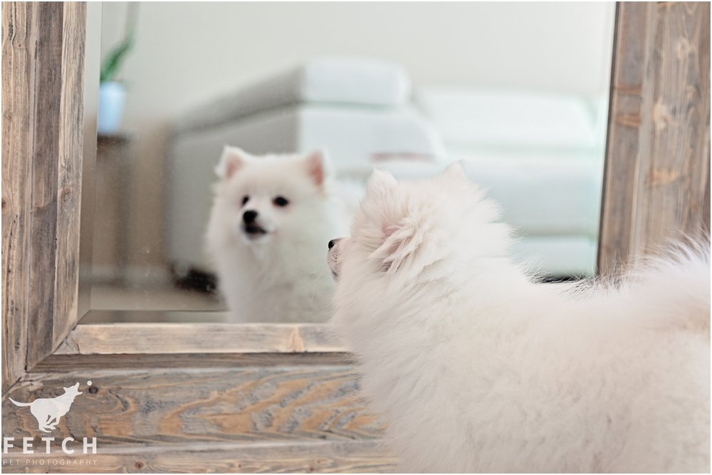 puppy-looks-in-mirror