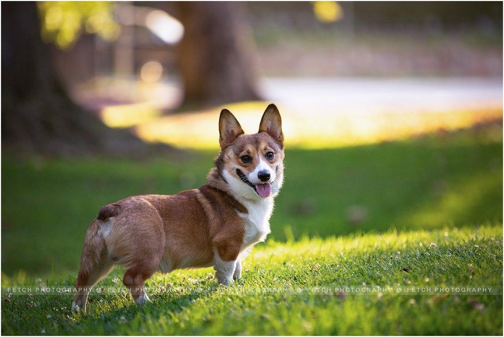 los-angeles-puppy-photographer