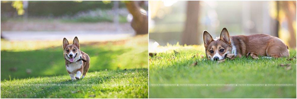 los-angeles-pet-photography