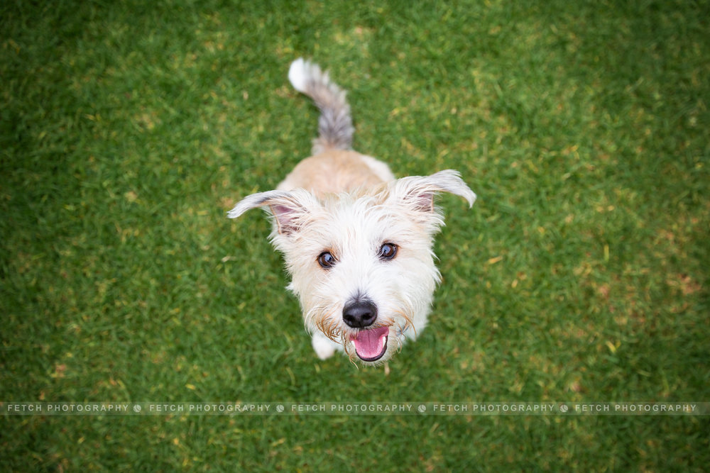 los-angeles-dog-photographer