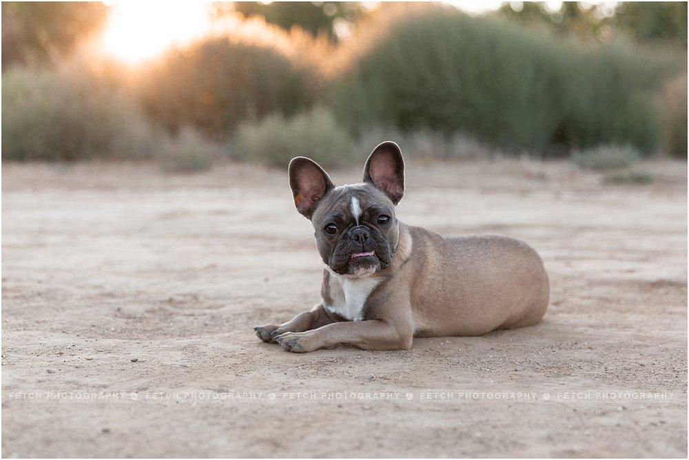 los-angeles-dog-photographer
