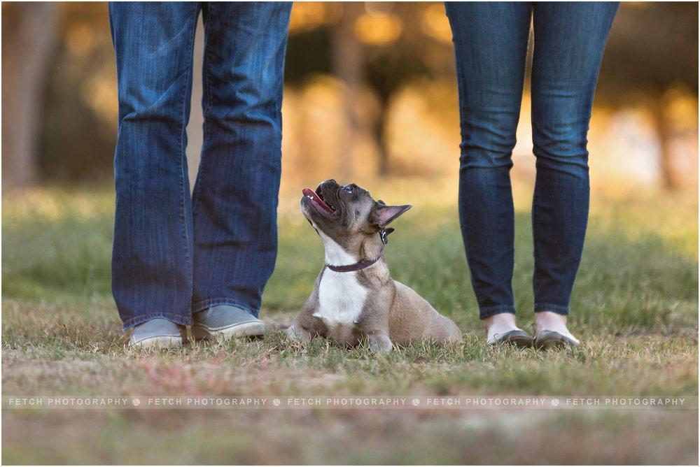 family-dog-portraits