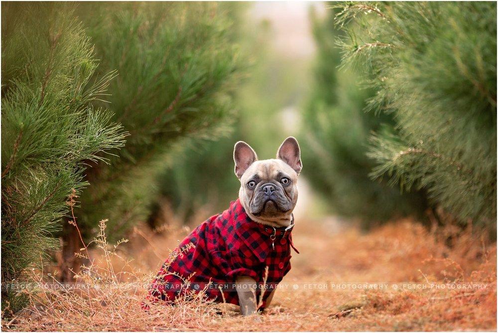 holiday-pet-photographer.jpg