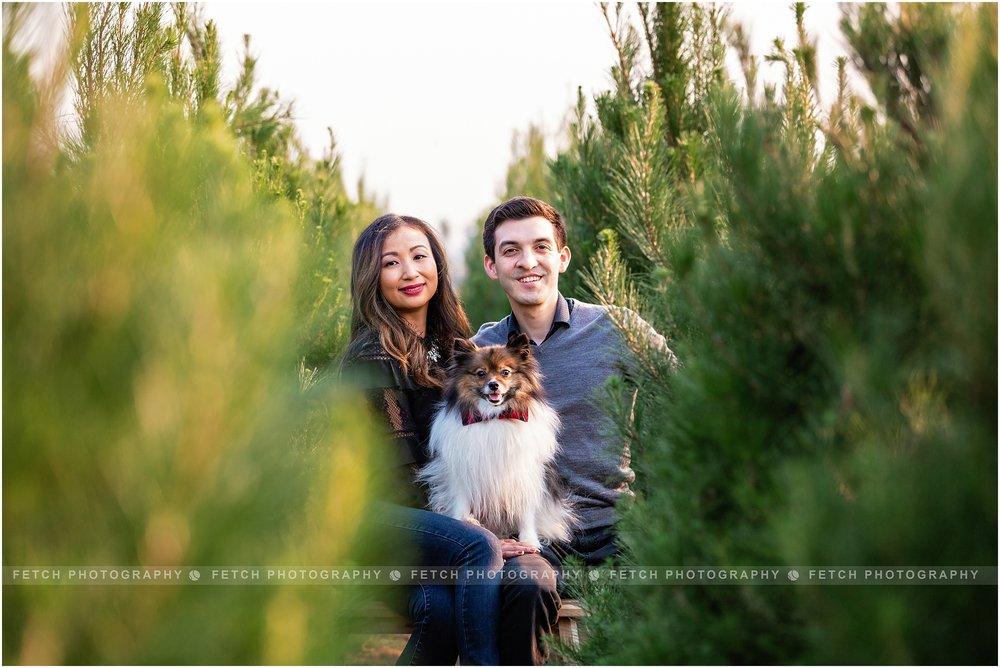 christmas-card-with-dog