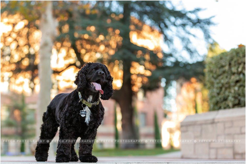 ucla-dog-photos
