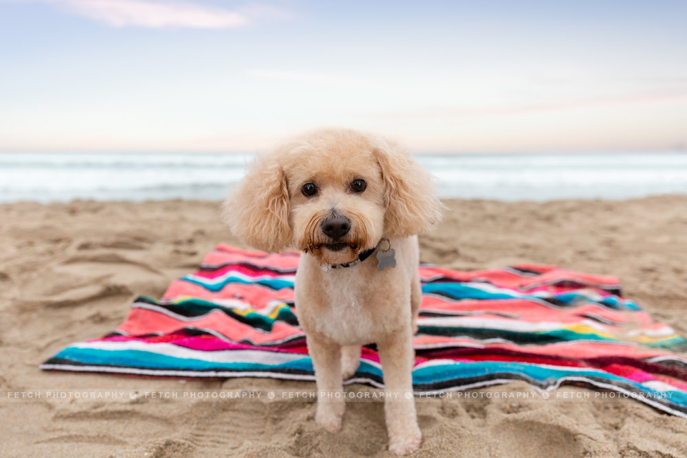 los-angeles-dog-beach-photographer