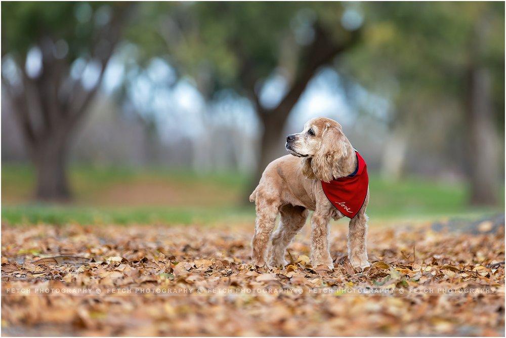 senior-dog-photography